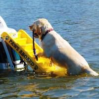 Paws Aboard Yellow Doggy Boat Ladder