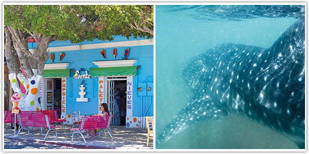 Ice cream shop on the malecon and a whale shark underwater