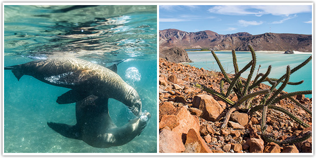 Sea lions at play, and hiking above a playa